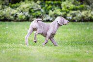 Paisley 9 Weeks Old