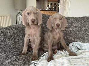 Paisley (on Right) with her brother at 8 Weeks Old