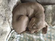 Paisley at 8 Weeks Old