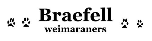 Braefell Weimaraners logo