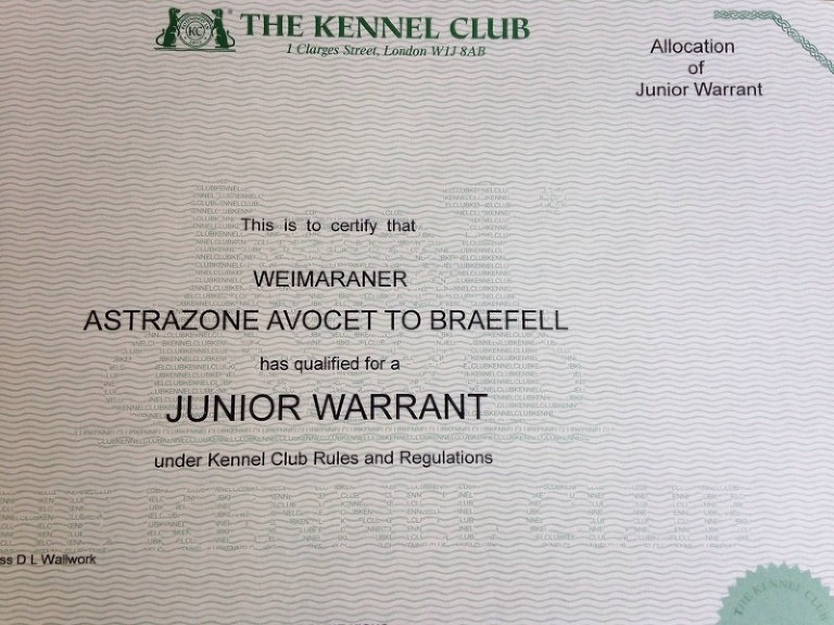Bracken's Junior Warrant