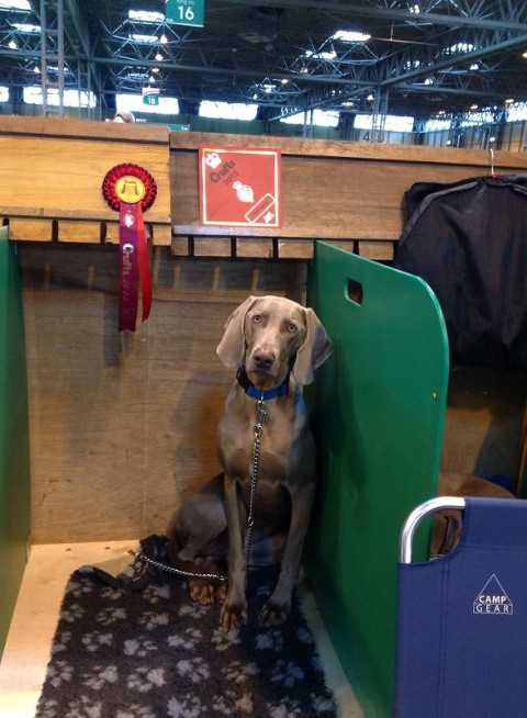 Bracken Crufts 2015 on the bench