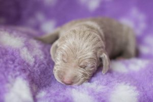 Paisley (Silver Girl) Week One