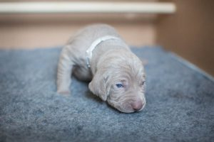 Paisley (Silver Girl) Week Two